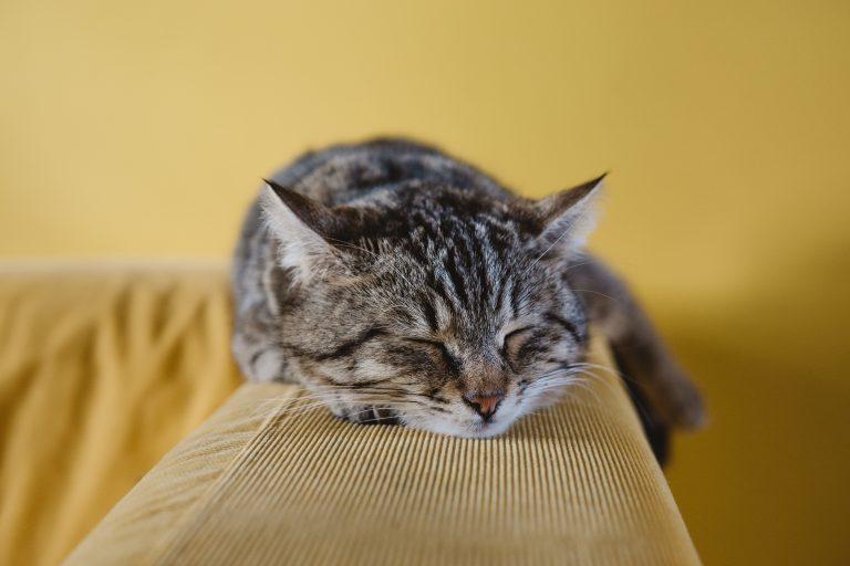 仕事をサボってる猫